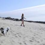 South beach - Dog on beach